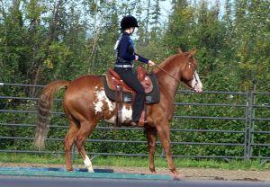Chestnut Frame horse