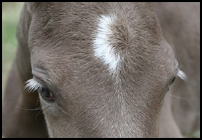 Typical color for silver on black. Note the light eyelashes.