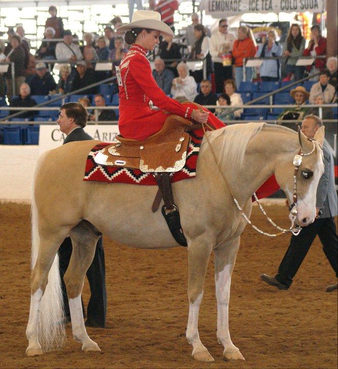 The Splashed White Gene in Horses | 'Homecoming' Blog  Splashed White Horse