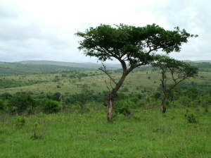 African landscape, from Morguefile.com