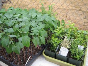 Seedlings May 6