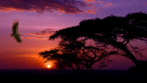 "<a href=""http://www.publicdomainpictures.net/view-image.php?image=576&picture=sunset-in-serengeti"">Sunset In Serengeti</a>"