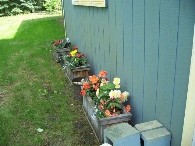 boxes of begonias