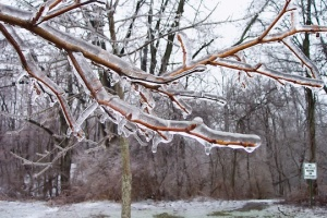 aftermath of an ice storm, from Morguefile