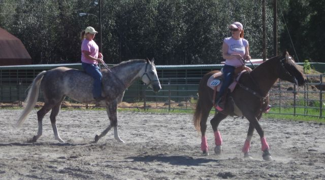 Horses in the bridleless class