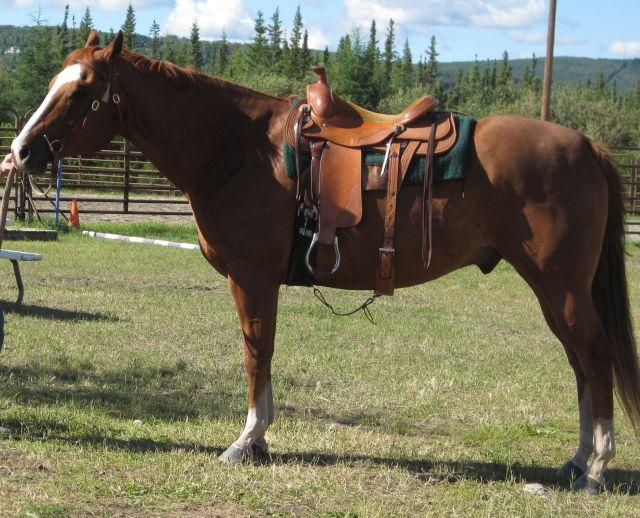 Sport (horse)