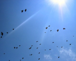 Sun in sky with birds