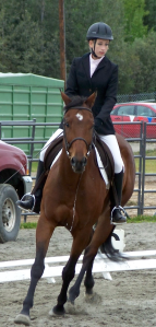 bay horse, cantering
