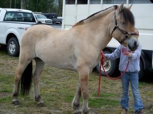 Dun Fjord horse