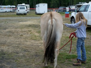 Dun Fjord horse, rear view