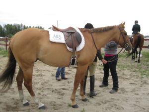 red Dun horse