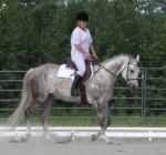 Dapple grey, trotting