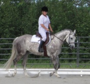 Dapple grey, trotting