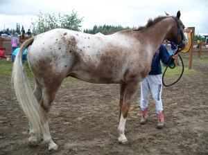 Chestnut varnish roan with spots