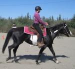 Black and white frame horse