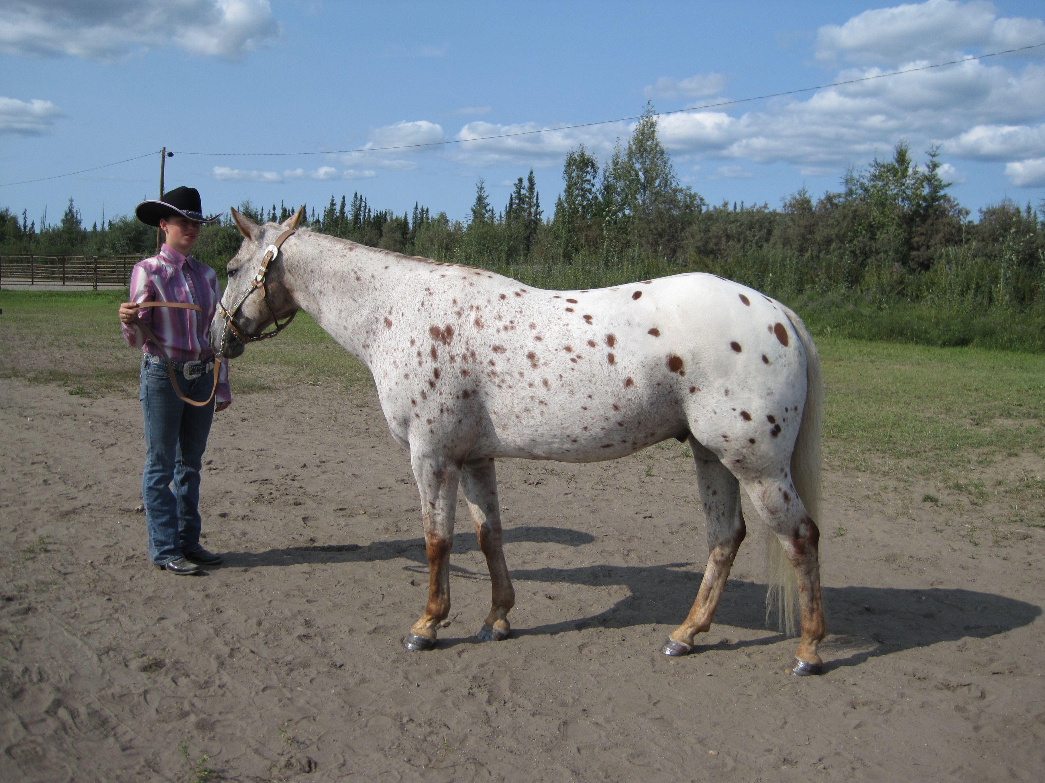 Horses Homecoming Blog