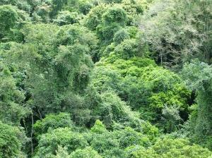 Jungle, Morguefile