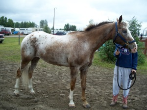 Varnish roan horse