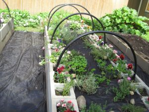 Herb bed and bordering flowers
