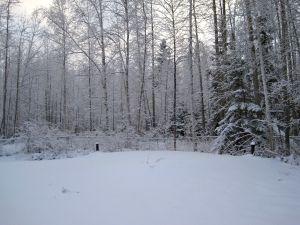 Alaskan yard