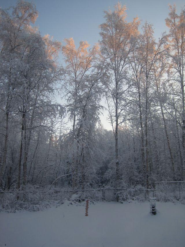 Snow on trees 11:20:13