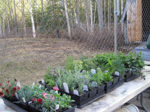 Hardening Plants 5-11-14