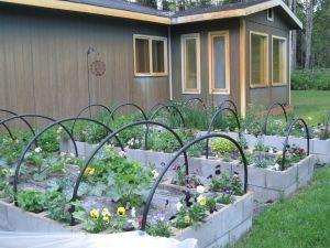 backyard 10-30 6-29-14