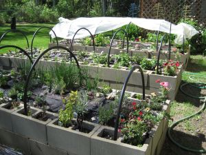 Raised beds as of June 7